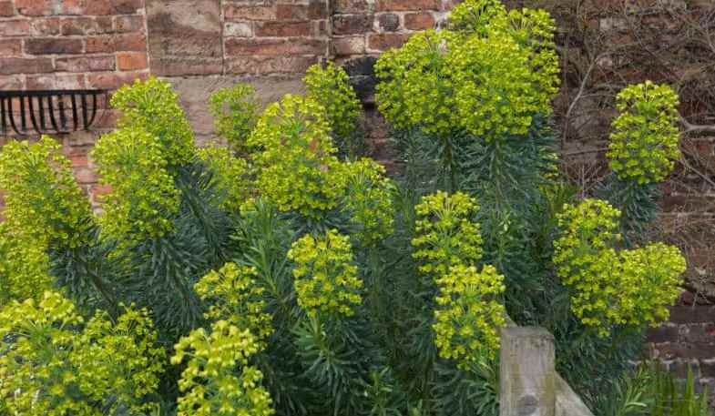 Top 12 Fast Growing Evergreen Shrubs For Filling In Spaces Quickly