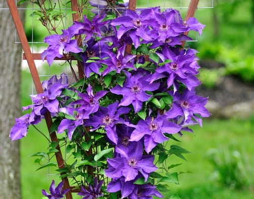 If you have climbing plants in your garden you know that they are a charming addition with whimsical cascades of beautiful flowers and rich foliage, but behind that are strong vines typically so strong that they can tear down the flimsiest of structures if not properly supported.
