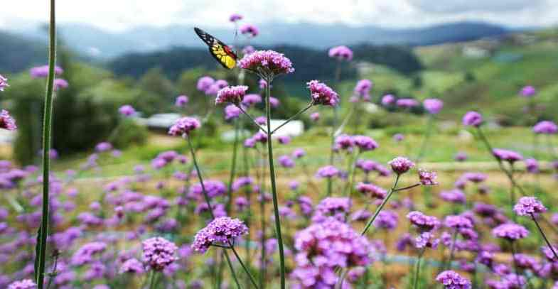 Our Top 10 Favourite Plants With Purple Flowers