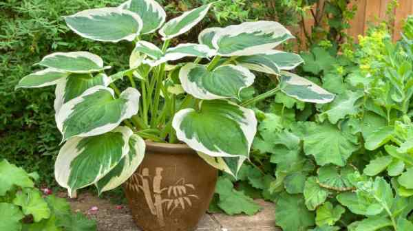 shade loving plants for containers