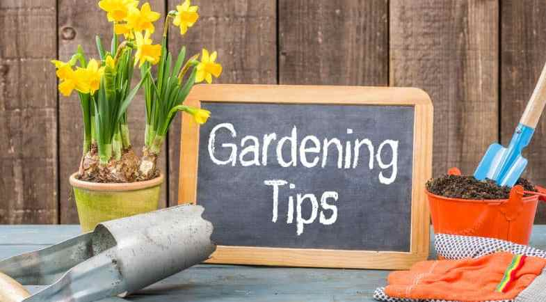 12 Top Garden Tips For Beginners With Pictures