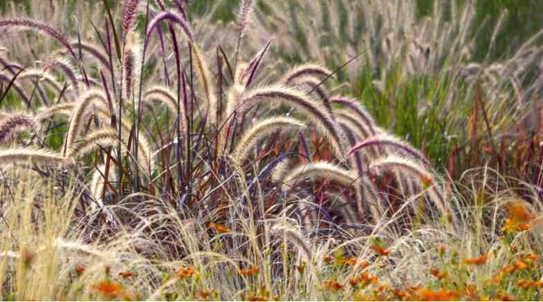 Growing ornamental grasses – the beginner's guide