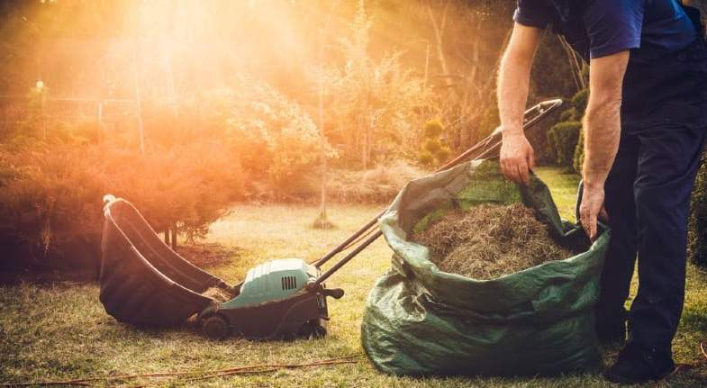 How To Scarify a Lawn – The beginner's guide