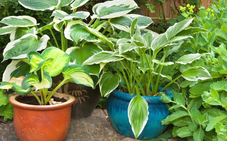 10 Perennial Plants For Pots – Our favourite picks