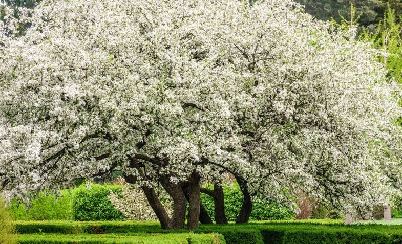 10 Stunning trees to screen out neighbours and provide much-needed colour