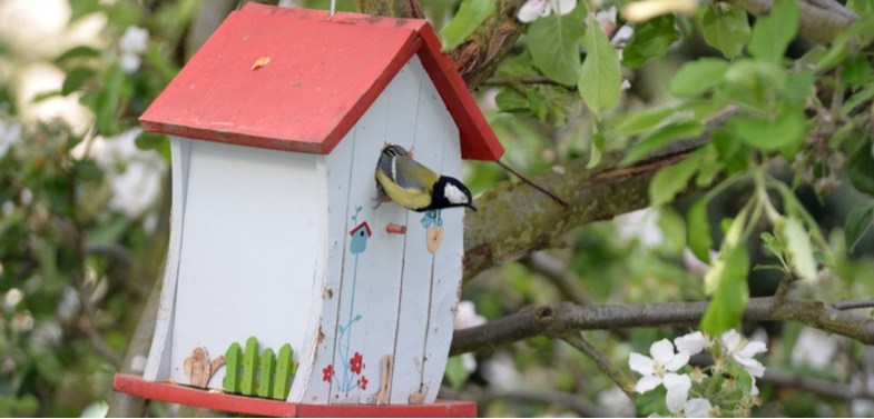 How to attract birds to a nest box