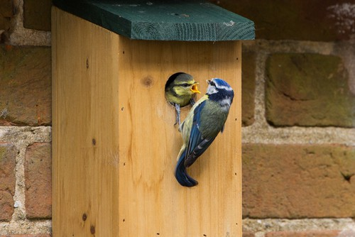 Choosing the right bird box for the right type of birds