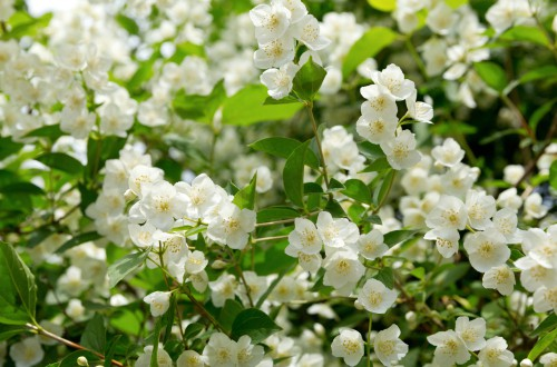 How to propagate Jasmine