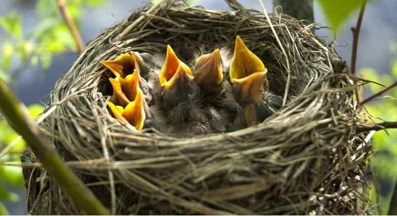 The best shrubs for attracting nesting birds – 8 top picks
