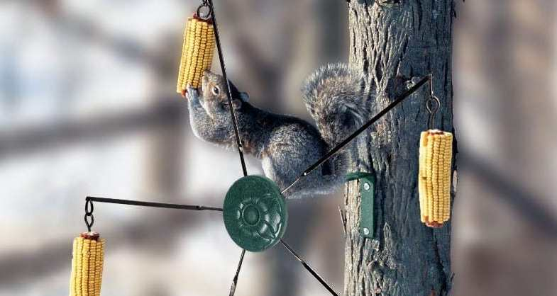 Top 5 Best Squirrel Feeders With Reviews and Buyers Guide