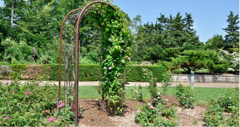 6 Best Garden Arbours and Arches Review