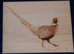 pheasant wood burning pyrography bmj