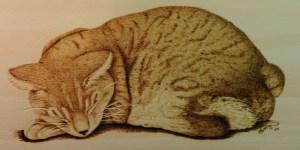 sleeping cat pyrography