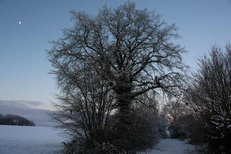 Die große Eiche - Dezember 2012