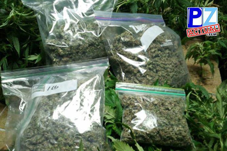 Proyecto para uso de marihuana medicinal es avalado por la Junta Directiva de la CCSS.