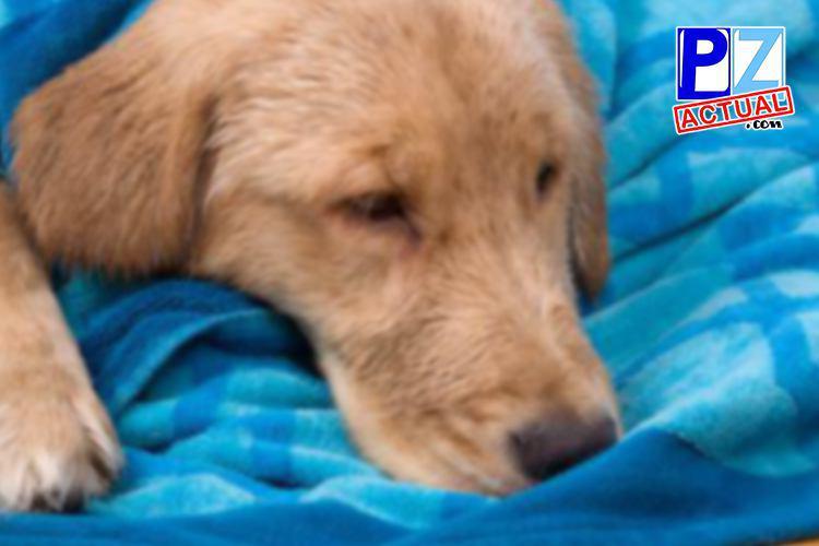 ¿Qué hacer y qué no hacer en caso de una intoxicación de nuestras mascotas?