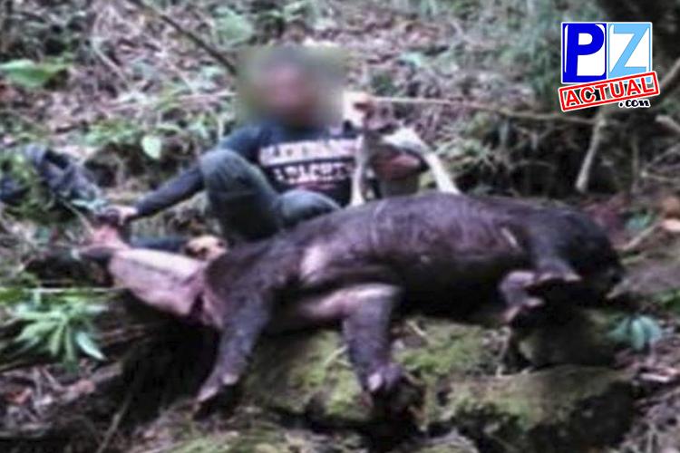 Sospechoso de matar a una danta quedó en libertad y sin medidas cautelares.