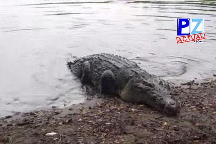 Adulto mayor muere tras ser atacado por un cocodrilo en Parrita.
