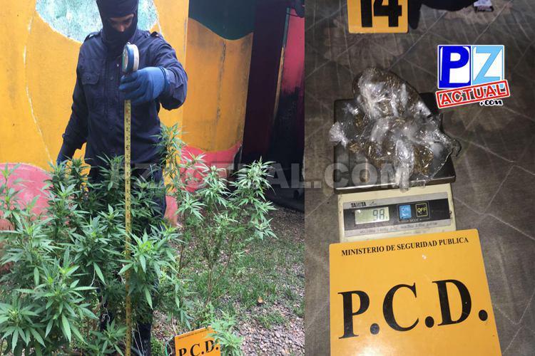 PCD capturó clan que comercializaba droga en Bahía Ballena de Osa en Puntarenas.
