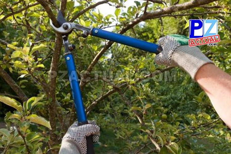 OIJ alerta sobre modalidad de estafa en la que se ofrecen servicios de jardinería.