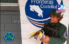 Policías fronterizos y antidrogas rescataron tucán atropellado por un vehículo en la Zona Sur.