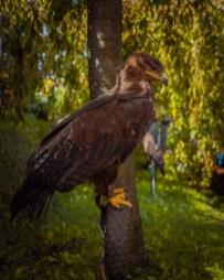 Ptaki łowcze zagościły na stoisku ZO Częstochowa