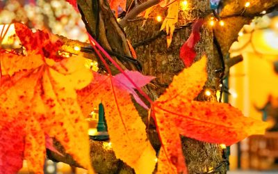Autumn: Moods and Colours