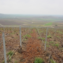 Endless vineyards at Mutigny