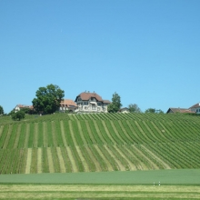 Vineyards Near Lausanne