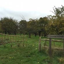 Ewart's Orchard