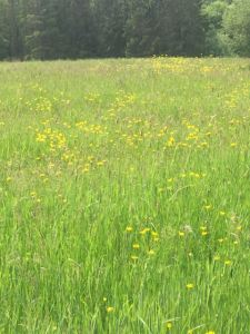 Meadow on Gribble Bridge Lane