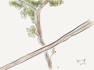 Ortega grape vine and a trellis support