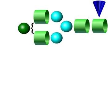 FA2G1 2-AB Glycan