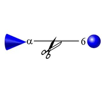 alpha-(1-6) fucosidase image