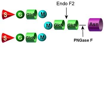 Endo F2 image