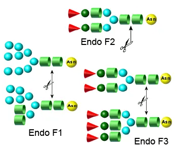 Endo F Multi-Kit
