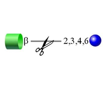 n-acetylglucosaminidase image