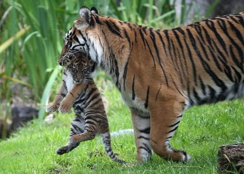 حيوانات تقتل صغارها