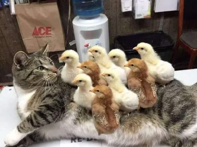 الصداقة كنز لا يفنى.. حتى بين فصائل الحيوانات المختلفة