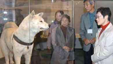 """""""هاتشيكو"""".. الكلب الذي انتظر صاحبه 10 سنوات"""