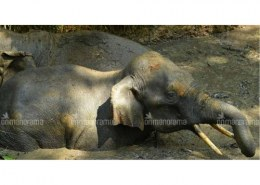 Name the two elephants involved in the rescue operation of Kerela Elephant?