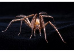 Why spiders usually have molting problems ?
