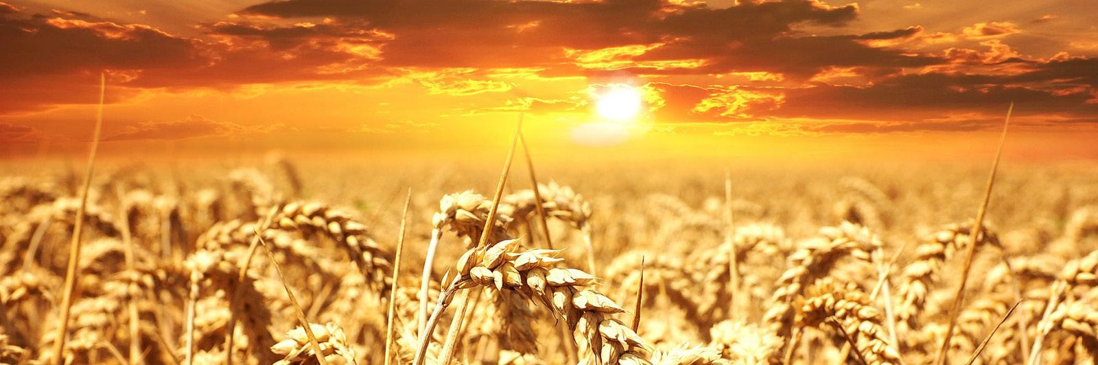 Sonnenenergie speichern Getreide