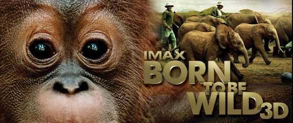 bor to be wild