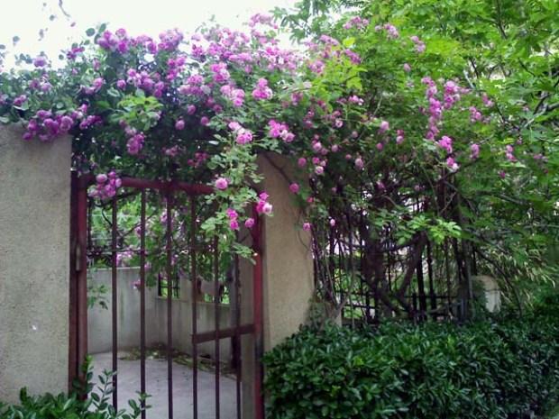 Badahu Flowers Qingdao