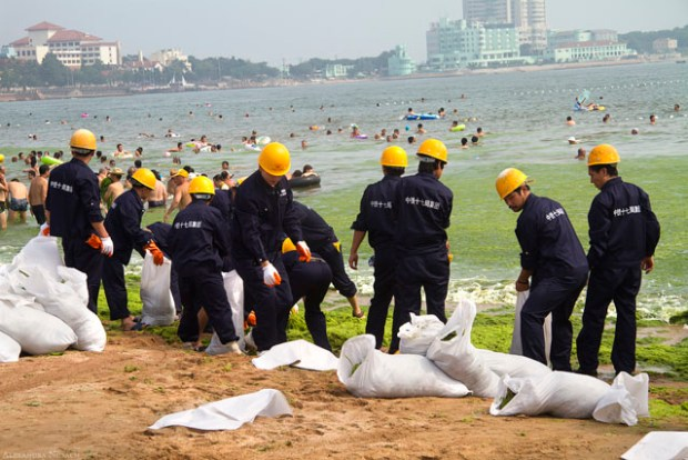 Qingdao Photos Alexandra Nosach Beach Algae Clean Up Hardhats