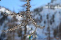 2014-03-14_15_16-Adus-WE_Trappeur-Photos_Pierre-029