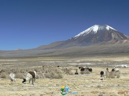 2008-09-23-Sajama-Aguas_Thermales-10