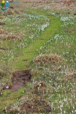 2015-04-28-Noirmont-Photos_Papa-IMG_4949