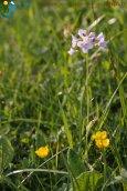 2015-05-25-Qispi-Jura_Leman-La_Dole-IMG_8976